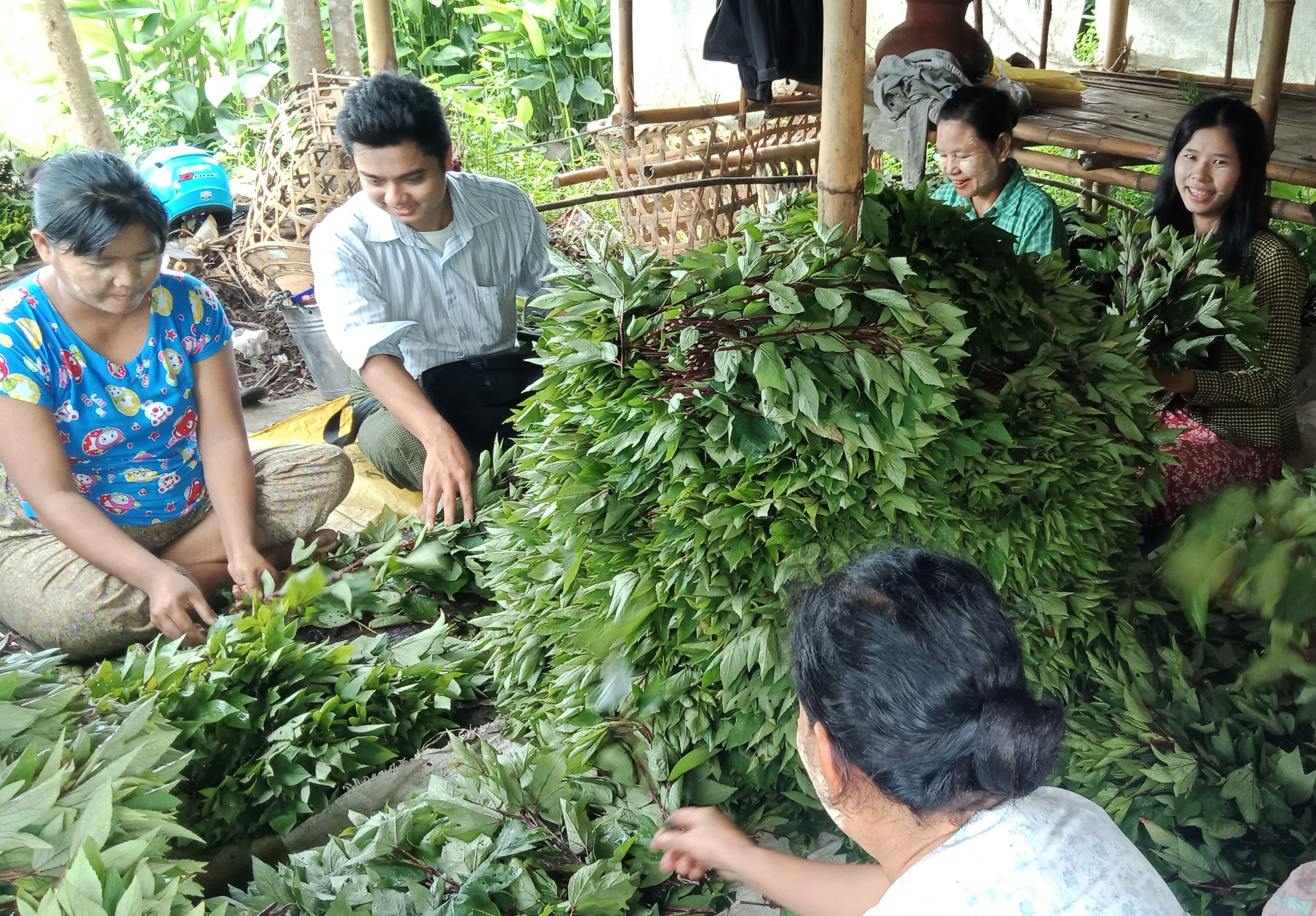 Team Makes Field Trip in Myanmar interacting